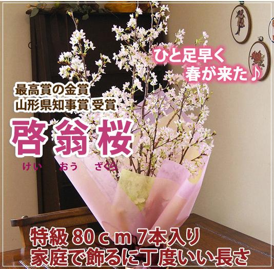 桜(サクラ)贈り物人気.png